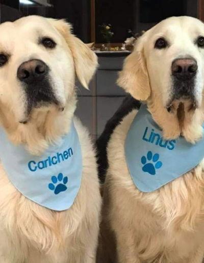 Halstuch für Hunde - 2 Golden Retriever mit den blauen bestickten Tüchern, Appliziert mit Carlchen und Lnus